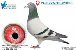PL-0275-16-21028-0