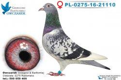 PL-0275-16-21110-0