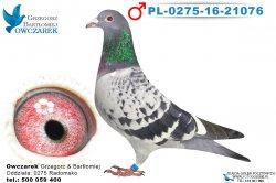 PL-0275-16-21076-1