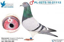PL-0275-16-21112-1