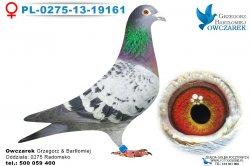 samica-PL-0275-13-19161