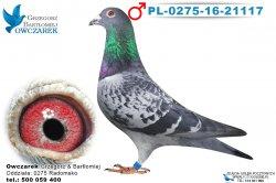 PL-0275-16-21117-samiec