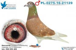 PL-0275-16-21129-1