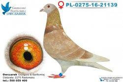 PL-0275-16-21139-0