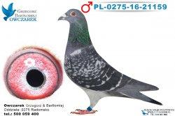 PL-0275-16-21159-1