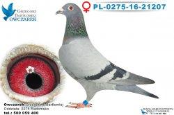 PL-0275-16-21207-0