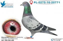 PL-0275-16-20771-samica