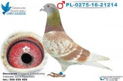 PL-0275-16-21214-1
