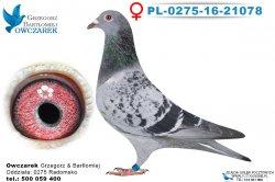 PL-0275-16-21078-0