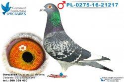 PL-0275-16-21217-samiec