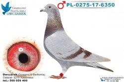 PL-0275-17-6350