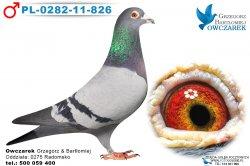 PL-0282-11-826-samiec