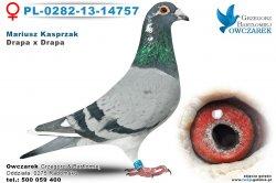 PL-0282-13-14757-golab