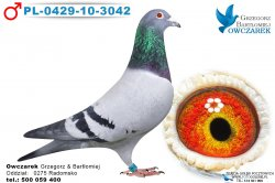 PL-0429-10-3042-samiec