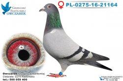 PL-0275-16-21164-samica