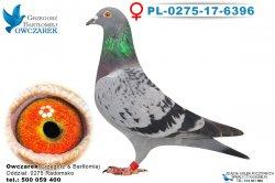 PL-0275-17-6396