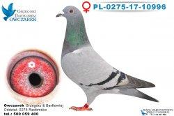 PL-0275-17-10996