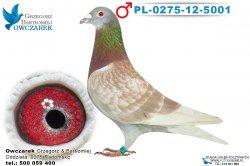 PL-0275-12-5001-1