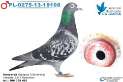 PL-0275-13-19108-1