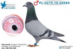 PL-0275-16-20686-1