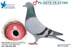 PL-0275-16-21166