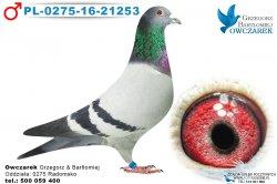 PL-0275-16-21253-samiec