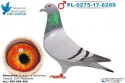PL-0275-17-6289